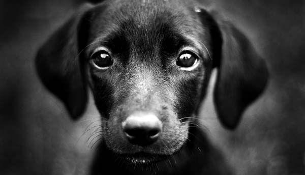 Полиция обращается к очевидцам Омского водителя-живодера, намеренно сбившего насмерть щенка