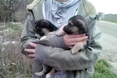 В Николаеве живодеры выбросили на свалку маленьких щенков (ВИДЕО)