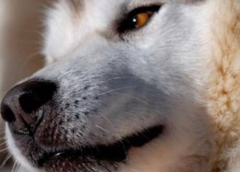 Против мужчины, выбросившего свою собаку из окна, не хотят возбуждать уголовное дело.