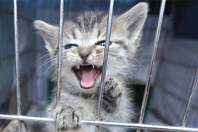 Сейчас же живодеров и мучителей собак и кошек судить нельзя