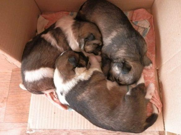 Щенки отравленной собаки ищут дом