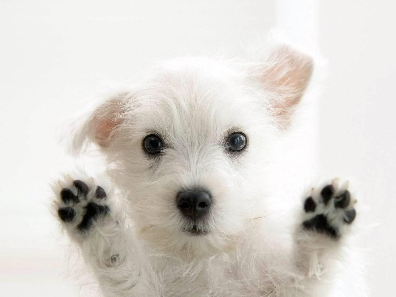 В Приморье вынесли обвинительный приговор живодёру, замучившего щенка