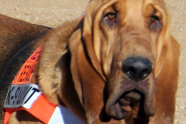 Собака-спасатель по имени Па Кэттл стала мэром американского города Дивайд, штат Колорадо