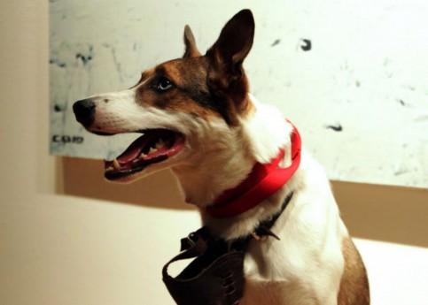 Город для собак: с какими проблемами сталкиваются владельцы животных