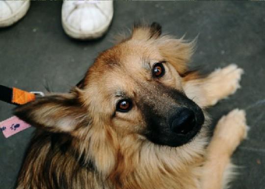 собака смотрит в глаза