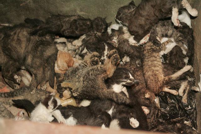 с приходом весны в Киеве взялись за старое убийцы животных - догхантеры