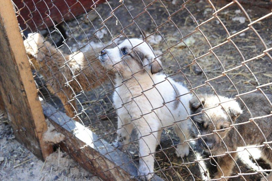 удивитесь, но собак разбирают очень быстро, — рассказывает учредитель и основатель приюта Анна Арбатская
