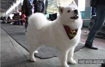 В России остро стоит проблема с догхантерами, отметили на международная выставка собак в Бишкеке