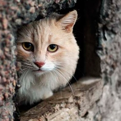 В то время как живодеры-догхантеры убивают животных, зоозащитники решают социальную проблему безнадзорных животных цивилизованно.