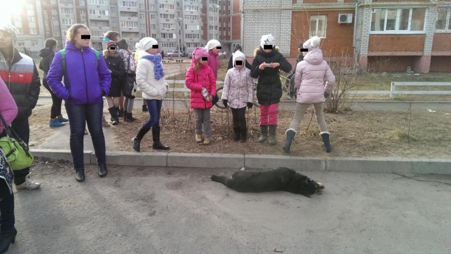 В Загородном парке догхантеры отравили несколько собак на глазах у детей