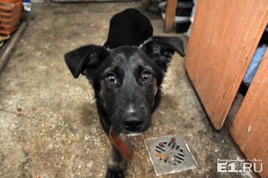 Власти Екатеринбурга расторгли контракт с компанией по отлову бездомных собак