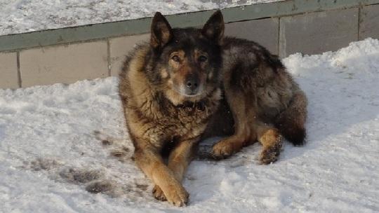 Волонтеры общества защиты животных «Кот и пес» считают, что в городе буйствует новая неизвестная инфекция, поражающая и убивающая собак