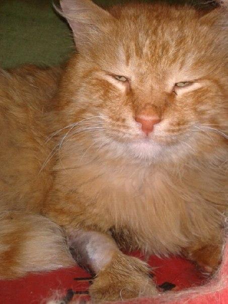 Живодеры прострелили живот самарскому рыжему коту