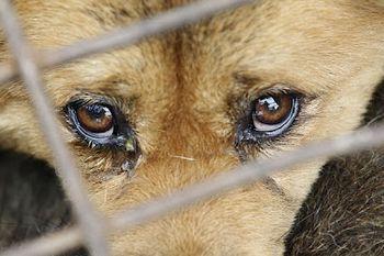 зоозащитники ждут новый законопроект о животных