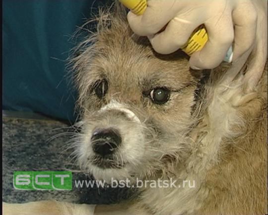 Полицейские Братска поймали живодера, который хотел убить и съесть собаку.