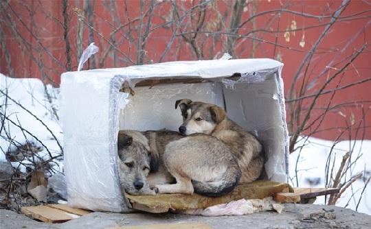 В Ленинском районе Тулы будет построен приют для бездомных животных за 54 миллиона рублей