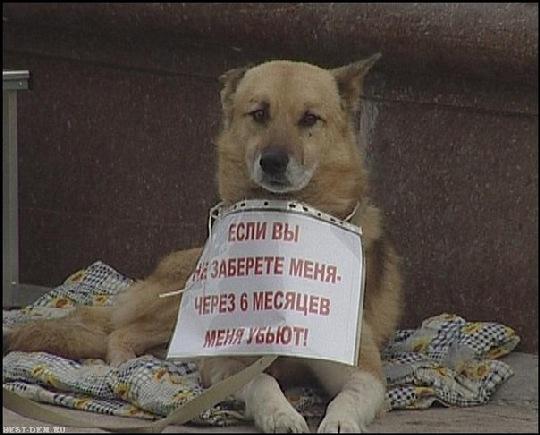 Власти Горловки наконец-то займутся решением вопроса бездомных собак