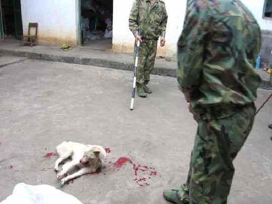 Защитники животных и неравнодушные жители Новокузнецка бьют тревогу