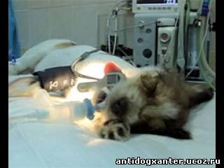 Ветеренары,вернули зрение,бездомному,щенку