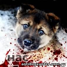 Расстрел щенков