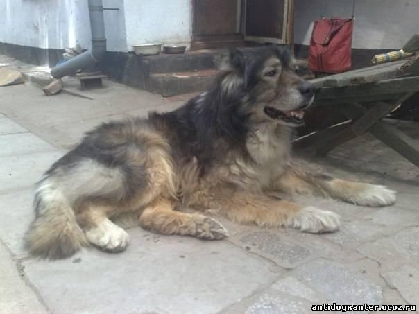 История со счастливым концом: собака, застрявшая на Новый год между зданиями, обрела своего хозяина.