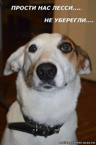 Возмущение жителей жестоким убийством собаки стало поводом для уголовного дела.