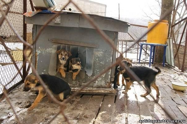 Житель Владивостока спас более 50 собак от голодной смерти