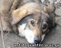 МОД АнтиДогхантер